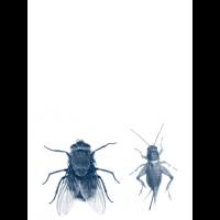Insecten en vliegen